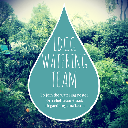 Join the dry season watering team