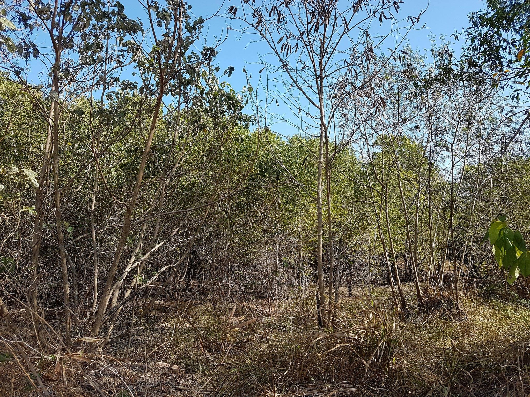 Help us restore the beautiful Rapid Creek